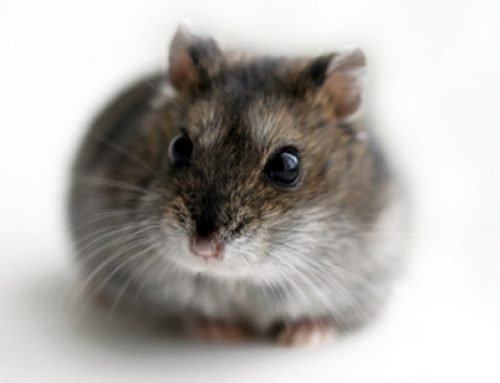 Customer Satisfacton – Wisdom from a Hamster